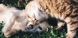 Strutture pet friendly per tutti gli amici a quattro zampe